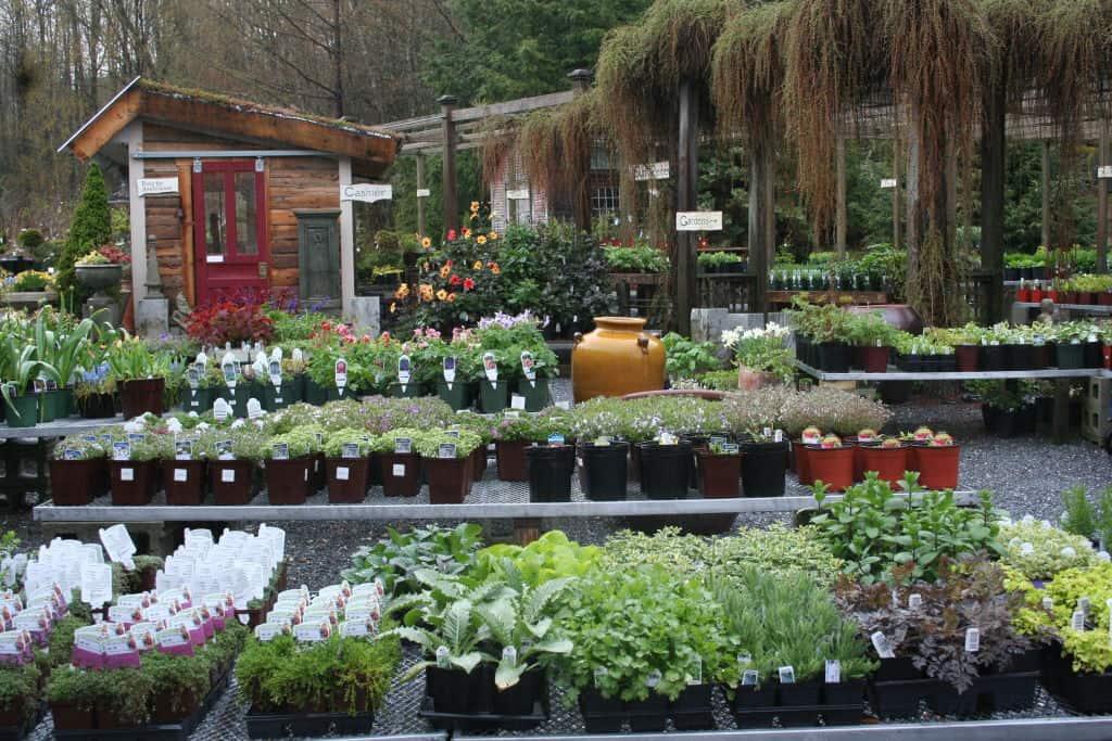 Rocky Dale Gardens Plant Catalog
